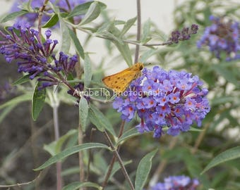 Butterfly Bush with Yellow Moth Color Photograph