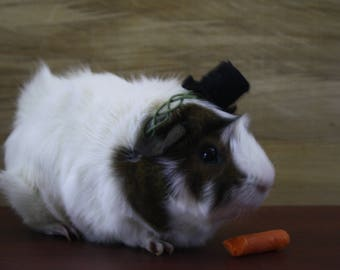 Guinea Pig/ferret Top Hat