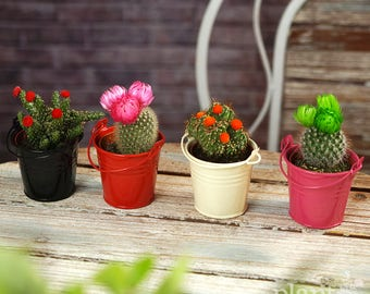 Mini Disco Cactus Mix In Decorative Coloured Metal Pails - Plants - House / Office Live Indoor Pot Plant - Ideal Wedding Favour Party Gifts