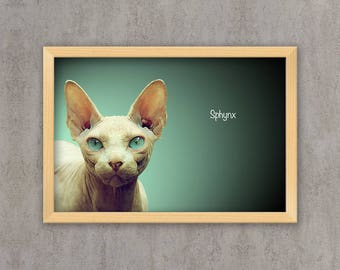 Sphynx - Cat breed poster, wall sticker, nursery decor, cat print, wall print, nursery print, shabby print | Tropparoba - 100% made in Italy