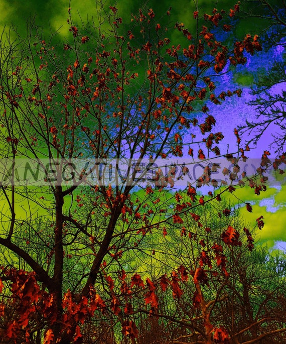 "INBETWEEN DAYS--- original photo transferred to thin, lightweight, reflective metal  20""H x 16""W one of a kind, no duplicates made"