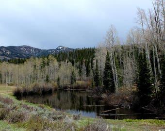 Pond 1 - Framed Fine Art Photograph - various sizes