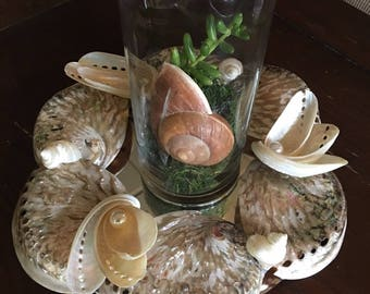 Table Decor Abalone Shells with Mirror / Wedding Decor Centerpiece
