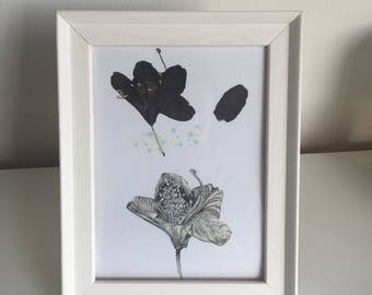 Burgundy rhododendron pen illustration and pressed flower print