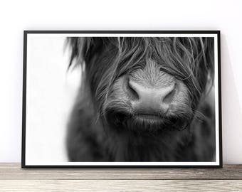 Highland Cow Print, Scandinavian Print, Large Wall Art, Black and White Photography, Highland Cow Art Print, Bull Photography, Scottish Cow