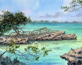 Mangrove on the Rocks