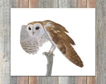 Common Barn-Owl Bird Print
