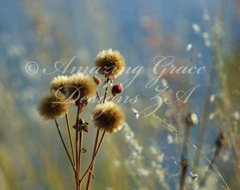 Printable Wall Art -Nature's Weeds, Blue, Beige, Soothing, Original Photography print