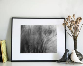 Abstract Trees, Photographic Print, 5x7, 8x10