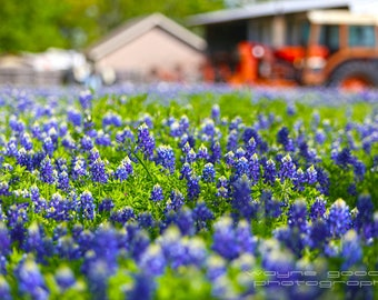 Texas Bluebonnets and Tractors, Landscape Photography, Home Decor, Wall Art,