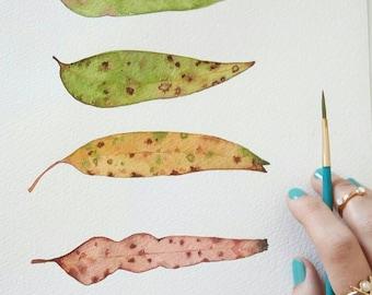 Gum tree leaves