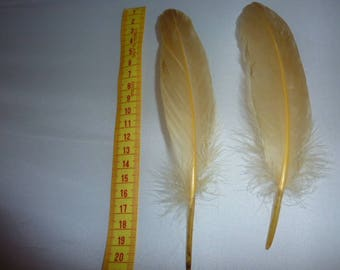 set of 2 natural feathers dyed yellow soft 15 to 20 cm approx
