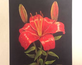 Sale Daylily PRINT Daylily Painting of flower painting Daylily  art print Flower red gold art print for kitchen wall art home decor