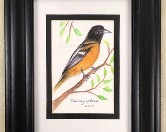 Baltimore Oriole on Branch