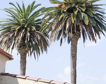 Palm Trees Photography, Archival print, Wall Art, Printable, Minimal Photography, City Art, Home Decor, Tropical, Beach, 11x14 Print