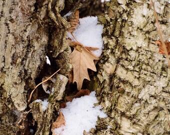 Remembering Fall