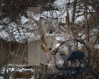 Deer in the Snow | Deer Photo Art | Deer Lover Gift | Fine Art Photography | Personalization | BDPhotoShoppe | Home Office Decor