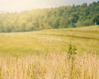 Summer digital background, summer backdrop, meadow background, field background, grass backdrop, spring, nature photography, sky, day