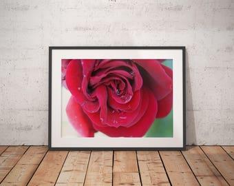 Digital Download Plant/Flower Macro Photography Home Decor