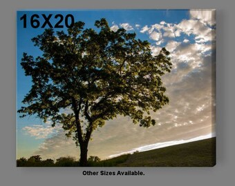 Fine Art Sunset/Landscape Photography-Tree on the Horizon