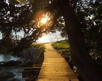 Parsley Bay Sydney