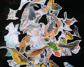 Paper Ephemera Bird Theme 50 Images for Paper Crafts Decoupage Scrapbooking