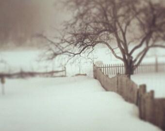 Maine winter at Apifera