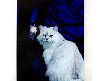 White cat in moonlight glass cutting board, white cat,persian cat,white cat glass, white cat art,midnite cat,long hair cat,moonlight glass