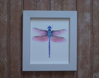 Framed dragonfly print,  framed insect watercolors, purple dragonfly, dragonfly watercolor print,dragonfly painting, Entomology art,