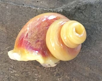 Glass Lampwork Sea or Snail Shell Focal Bead or Pendant by Hannah Rosner