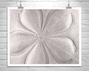 Bathroom Picture, Bathroom Wall Decor, Bathroom Wall Art, Seashell Art, Black and White, Seashell Picture, Shell Photograph, Photo on Canvas