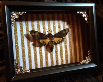 Death's-Head Hawkmoth Shadowbox - Gothic Gift - Hawk Moth - Halloween Decoration - Gothic Home Decor - Curiosities - Silence of the Lambs