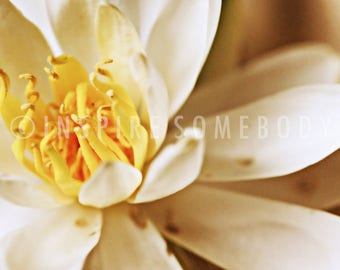 A NEW DAY 8x12 Micro White and Yellow Flower Fine Art Print