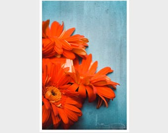 rustic farmhouse wall art, orange flower photo, orange botanical print, aqua blue decor, floral still life, cottage chic art, orange daisy