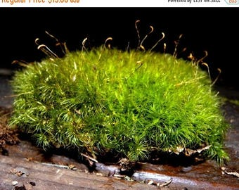 Save25% Mood Moss Gallon Bag-Frog Moss-Live Moss for Terrariums and Vivariums