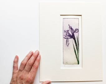original color etching of an iris