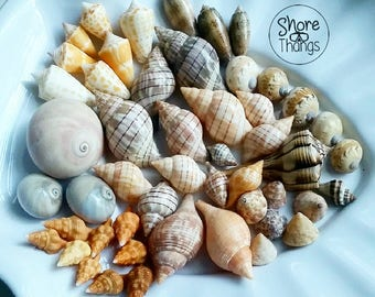 Marco Island Sea Shells - Variety Package from July/Aug  2017