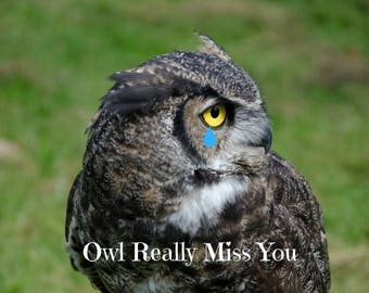 Owl Really Miss You Photo Greeting Card, 4x5 miss you cards blank inside just because, missing love card, encouragement care saying goodbye
