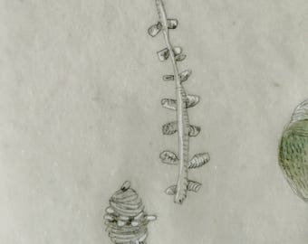 Tiny Branch and Seed Pods / Daily Drawing July 31, 2017 / Beeswaxed Drawing / Pencil, Ink and Watercolor