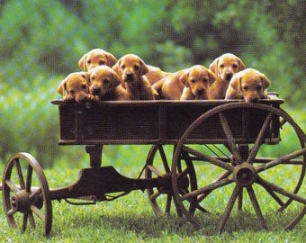 Jumbo Kids Sticker Featuring Lots of Dogs in a Wagon Decal Handmade Scrapbooking Puppies Labradors Party Favor