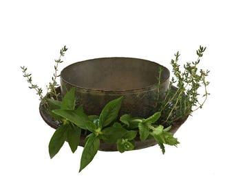 Antique, Borden's Steel Milk Can Lid, Kitchen Herb Planter
