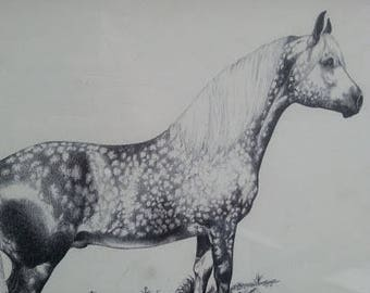 Irene Brady Illustrated American Horses ponies framed with glass artwork