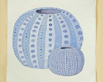 Sea urchin shell original watercolour illustration painting part of a series ocean natural history A4