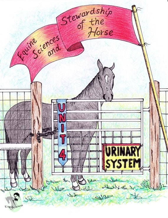 Unit 4 Urinary System Equine Sciences and Stewardship of