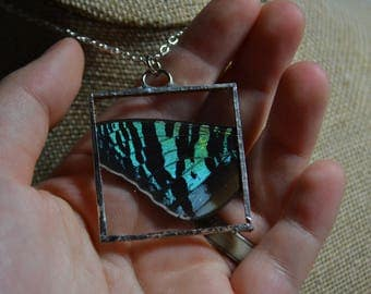 Chrysiridia Rhipheus - Real insect jewelry - Sunset Moth - Butterfly Wing - Moth Wing - Butterfly Wing Necklace - Cruelty Free