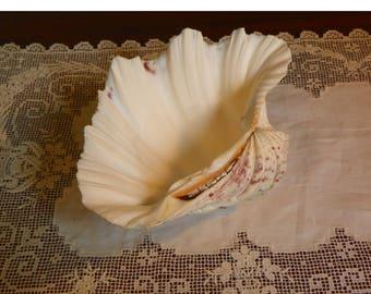 Antique CLAM Shell Tridacna Gigas Seashell Sea Shell shore Sand Beach 7 x 5