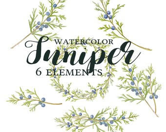 Juniper Clipart, Watercolor Juniper Branch Clipart, Juniper Wreath, Juniper Berries, Juniper Watercolor, Juniper Clipart