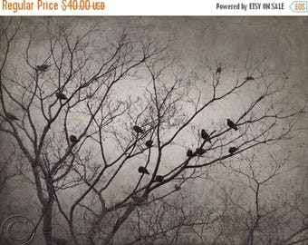 ON SALE Blackbird Flock, Blackbird Print, Flying Blackbirds, Flock of Blackbirds, Surreal Blackbirds, Bird Flock, Black Birds