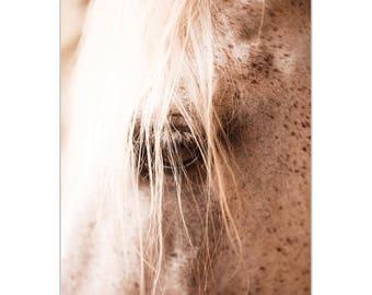 Contemporary Wall Art 'Horse Eye' by Meirav Levy - Horses Decor Modern Wildlife Artwork on Metal or Plexiglass