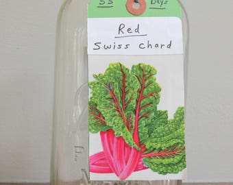 Swiss Chard 'Ruby Red' Seed, Non-GMO Seed, Fall Garden Seeds